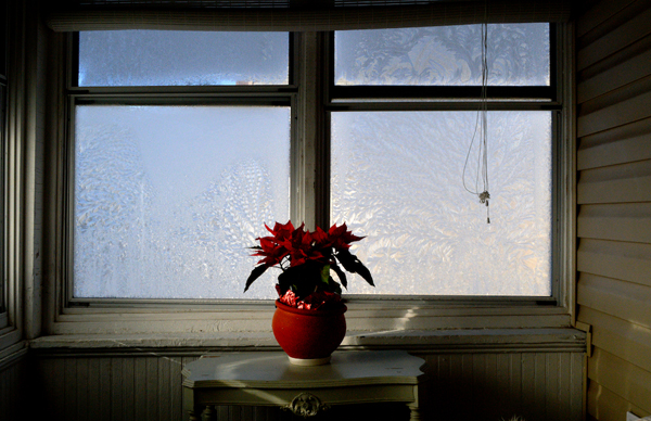 Schwab_Pointsettia-FrostyWindows_600x388